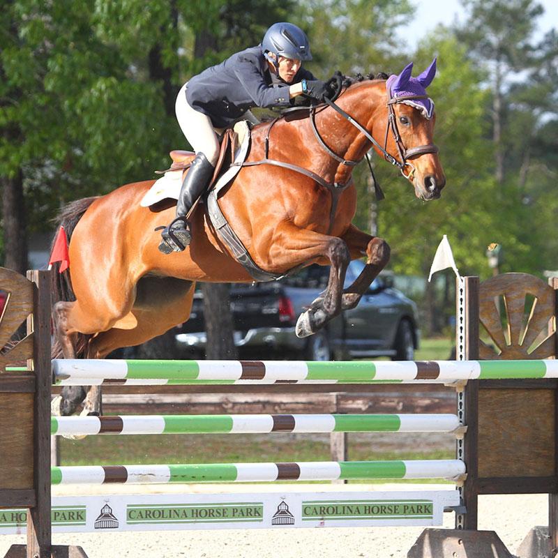 Dynamic Equine Saddle Fit